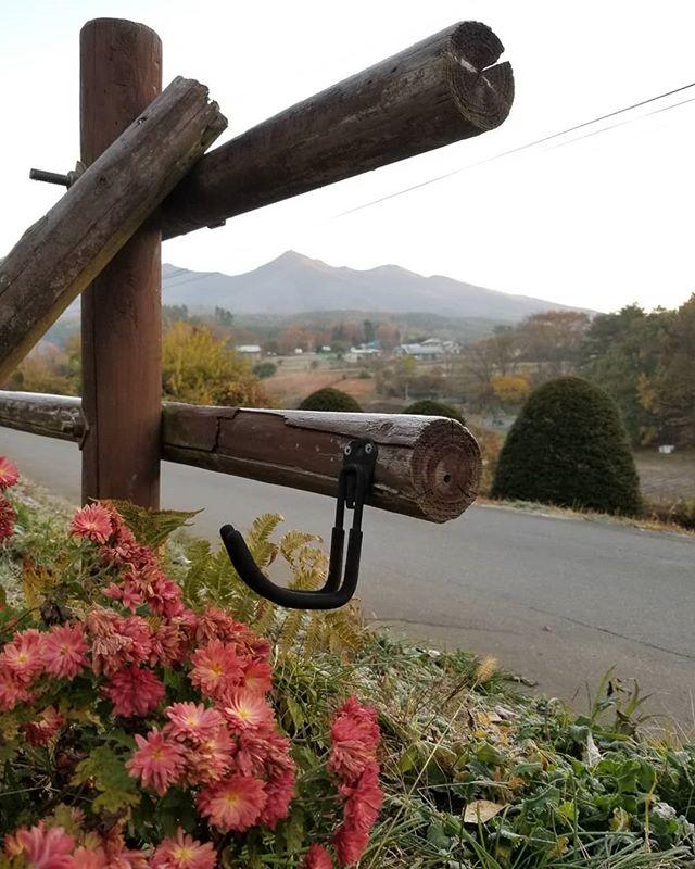 ここ数日 朝の風景は霜で始まる牧柵の丸太に ルバーブ葉に しおんのロゼットに 季節はもう後戻りしない 今日ルバーブを刈り上げます #八ヶ岳この庭のめぐる季節 #ひなぎくきつね