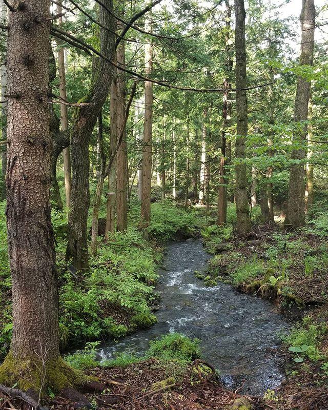 水源から浄水場へ木立の中を #ひなぎくきつね