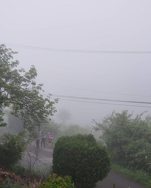 朝霧 #ひなぎくきつね