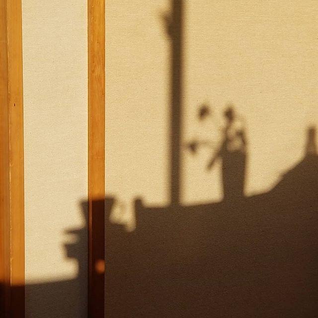 朝の食卓の光と影 ばら3輪とカフェオレカップ #八ヶ岳この庭のめぐる季節 #ひなぎくきつね #allthebeautifulthings
