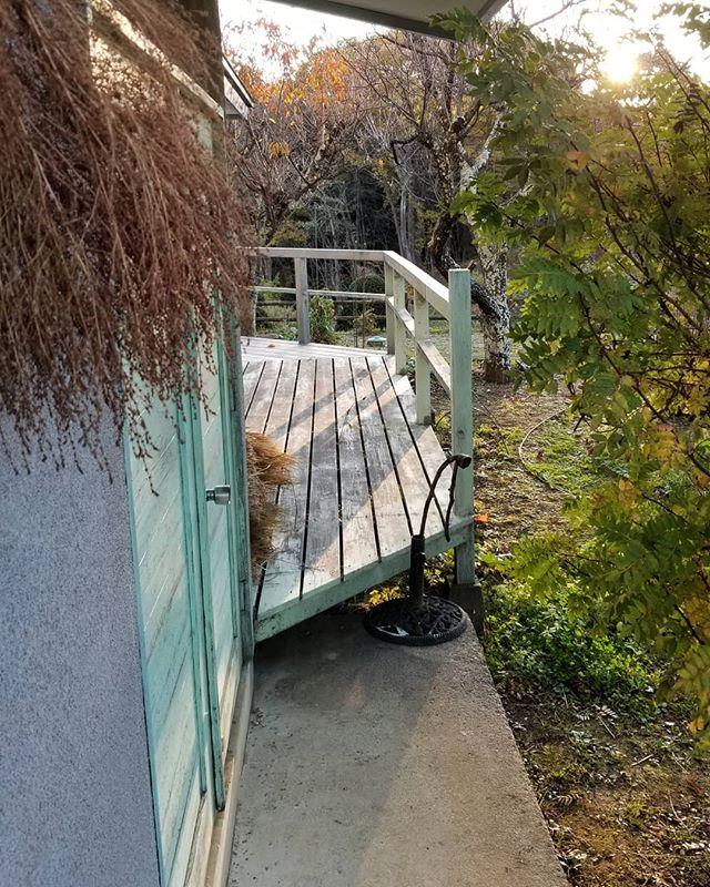 朝の玄関の光と影 太陽を透かせる山椒の大木 ドア右に稲藁 ドア左は乾燥途中のほうきぐさ #八ヶ岳この庭のめぐる季節 #ひなぎくきつね #allthebeautifulthings