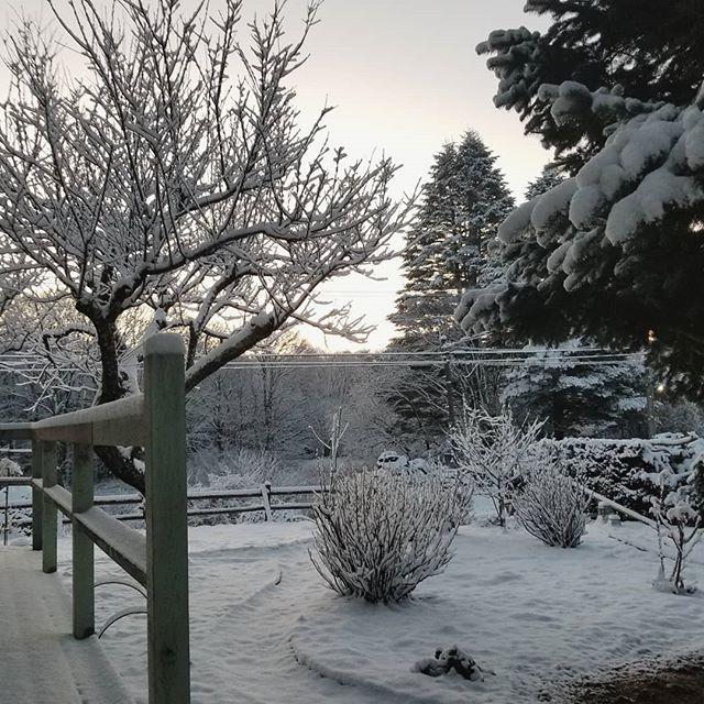 世界は一夜で白くなりました #八ヶ岳この庭のめぐる季節 #ひなぎくきつね #countrysideskyjapan