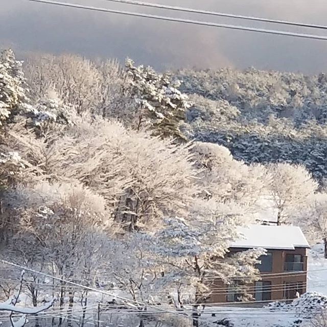 一夜の雪の林を照らして朝日が昇る #八ヶ岳の空機嫌 #ひなぎくきつね #countrysideskyjapan