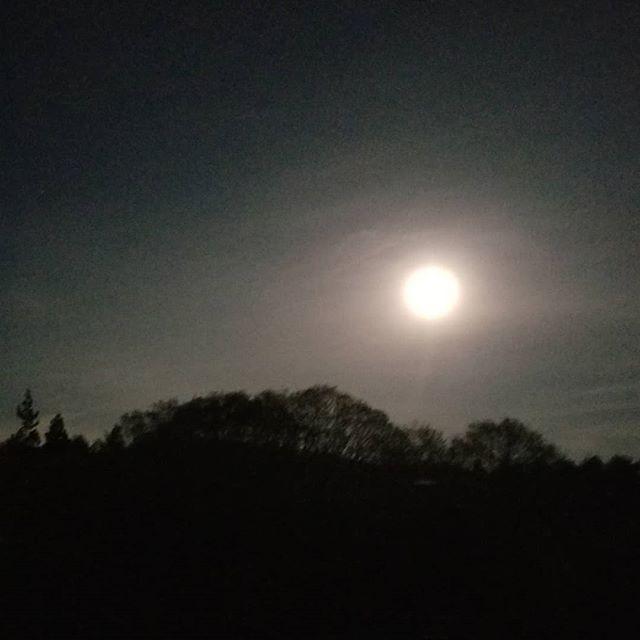 五月の満月 #ひなぎくきつね